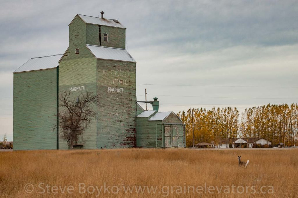 Deer and the Alberta Pacific grain elevator in Magrath, AB. October 2014.
