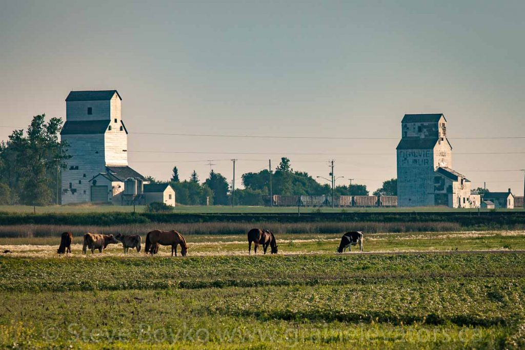 Horse power and grain elevators in Napinka, MB, Aug 2014. Contributed by Steve Boyko.