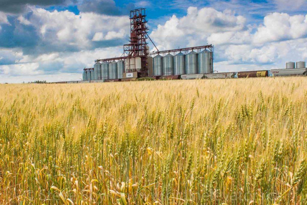 The Cargill grain complex outside Nesbitt, Manitoba, August 2014. Contributed by Steve Boyko.